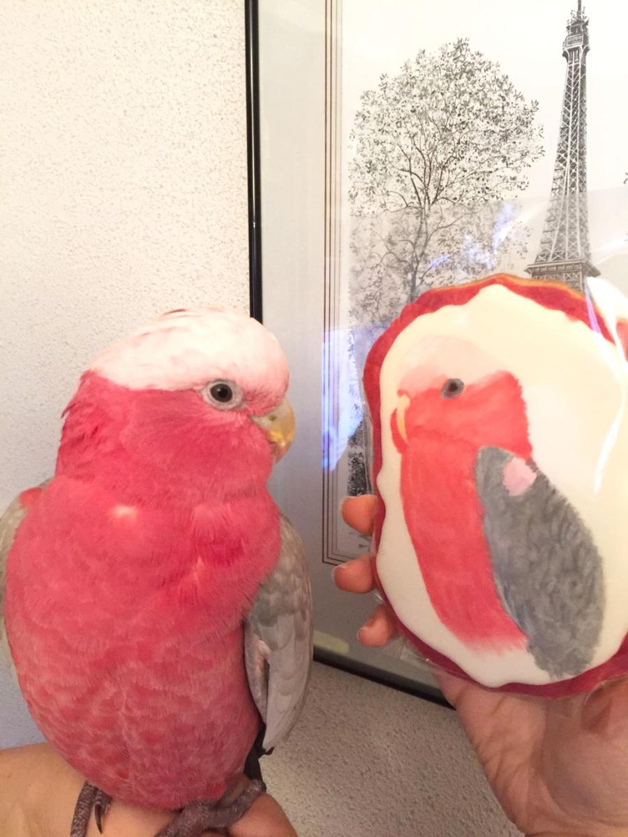 Una galleta llamada Perla